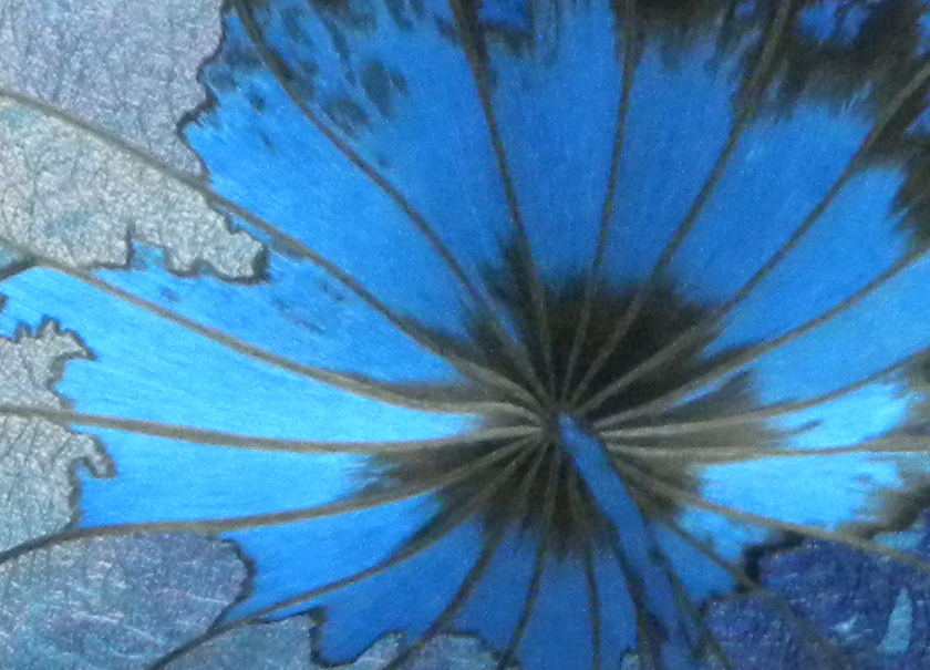 Blue lotus leaf